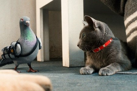 Кадры из фильма кошки против собак смотреть онлайн месть китти галор