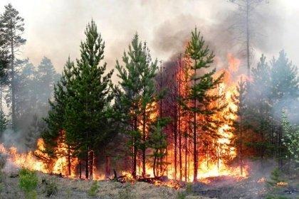 Грозы вЮгре вызвали два больших лесных пожара— МЧС