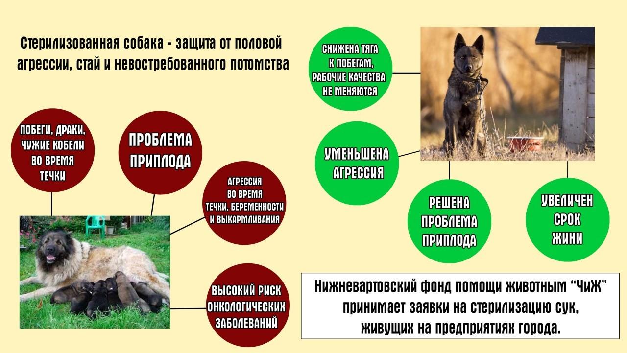 Вартовчане смогут бесплатно стерелизовать собак, живущих на территории предприятий