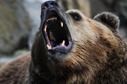 Гражданин Томской области попал в поликлинику после нападения медведя